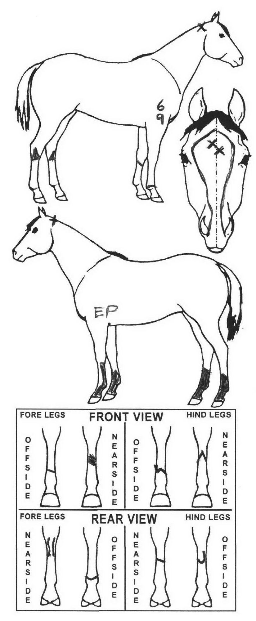 Animals Marking Image